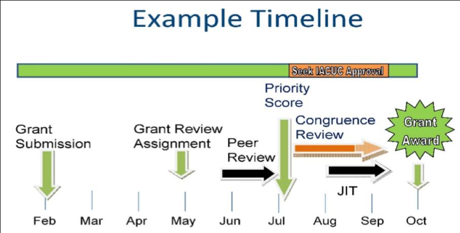 iacuc_timeline_example